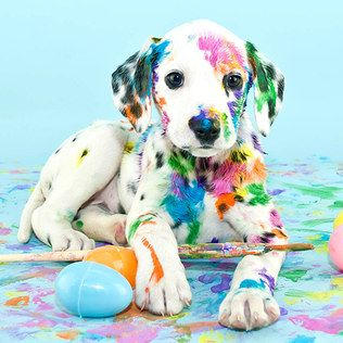 Not Quite the Easter Bunny.... adorable #easter #dog