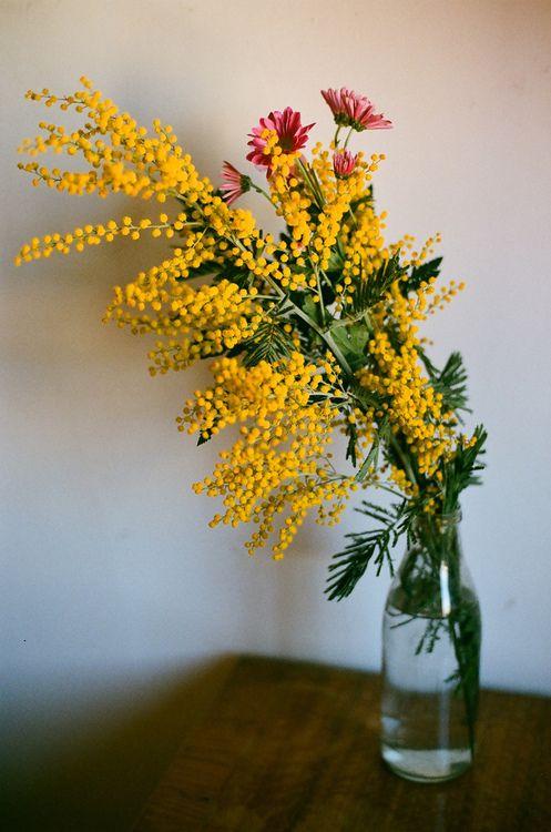 by Valentina Castro. ¡Qué delicada y versátil es la #mimosa! Perfecta para…