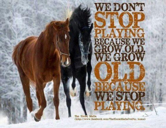 Live life, ride horses