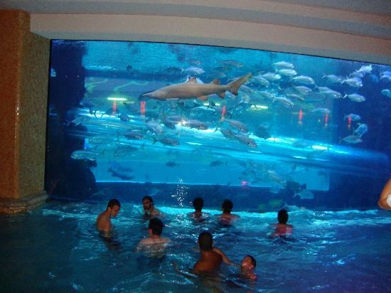 Shark tank las vegas and pools on pinterest for Pool spa patio show las vegas