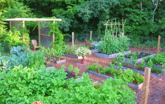 kitchen garden, lots of info on this site