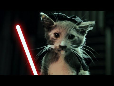 """Jedi Kittens Strike Back - """"Jedi Kittens Strike Back"""" In my #cubicle giggling while watching this! TY for #kittens, #videoediting, & #starwars. Now today can begin."""