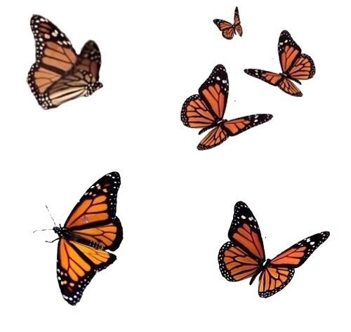 The Butterfly Effect Butterfly Wallpaper Butterfly Drawing Overlays