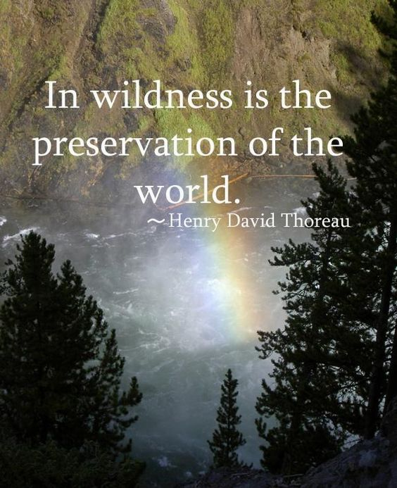 In wilderness is the preservation of the world #PictureQuotes