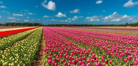 Photograph Colors of the Spring by  Visual Arts on 500px