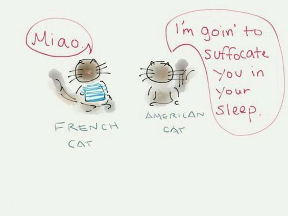 French cat, American Cat... ~D~