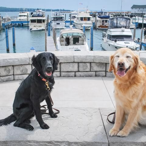 Dog Friendly Mackinac Island Mi Bringfido Mackinac Island Dogs Dog Friends