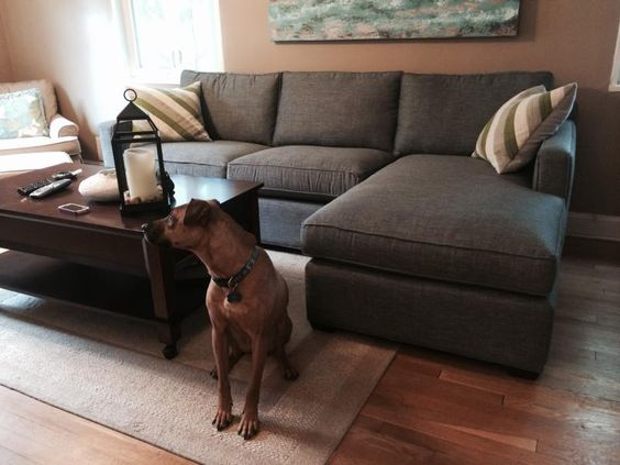 Love it the o 39 jays and sectional sofas on pinterest for Crate and barrel dog
