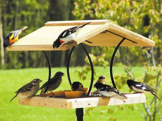 Birds Choice Large Cedar Fly-Through Bird Feeder, Quality Handcrafted Fly-Thru Bird Feeders