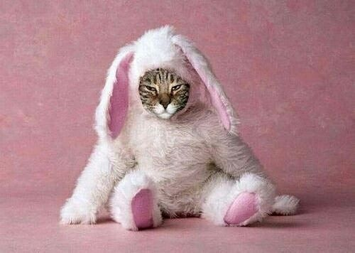 So that's what the easter bunny looks like;)My kitty would have a scowl on her face
