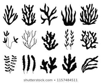 Sea Corals Seaweed Black Silhouette Vector Stock Vector Royalty Free 736352575 Coral Art Marine Plants Silhouette Art