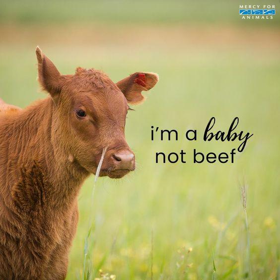 #veganshare #veganuk #adoptdontshop #veganlove #instavegan #vegangirl #animalrights #veganactivism #govegan #veganfortheanimals #peta #veganlife #speciesism #veganfood #dairyfree