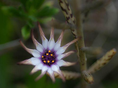 little sunshine | Flickr - Photo Sharing!