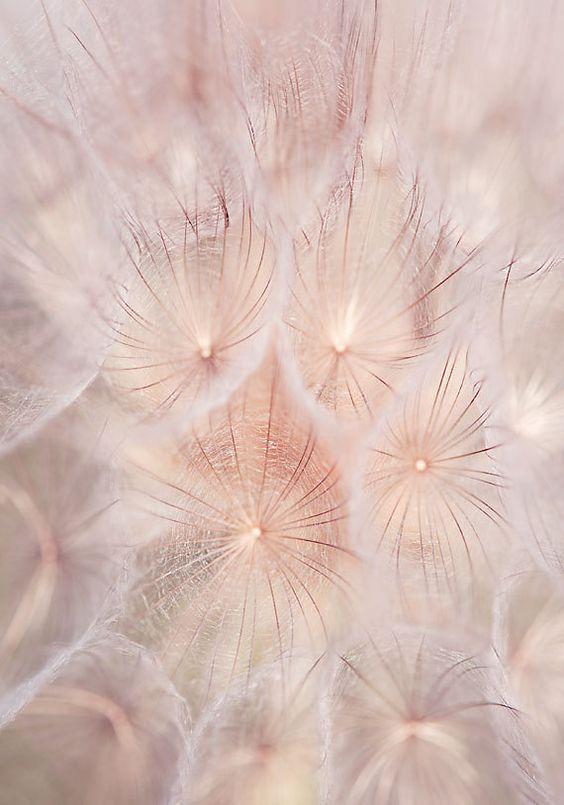 Impresión, fotografía de flor diente de León fotografía, imprimir minimalista…: