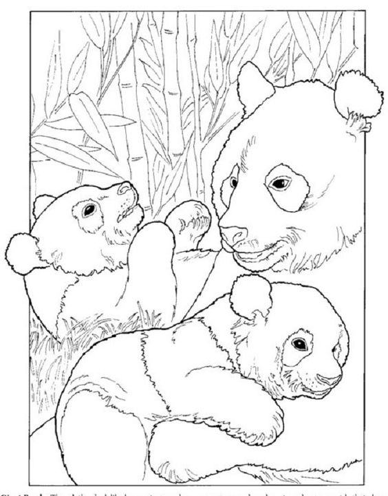 printable giant panda coloring pages - photo#5
