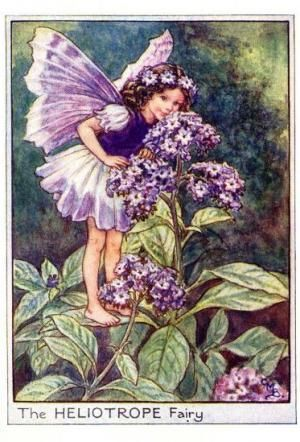 Garden Fairies:  The Heliotrope Fairy by Cicely Mary Barker
