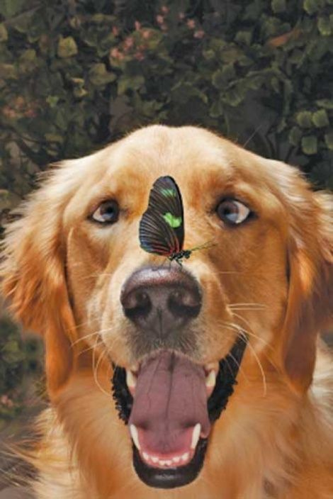 Dog and butterfly!: