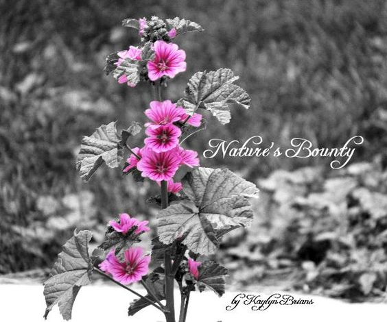 Nature photography book
