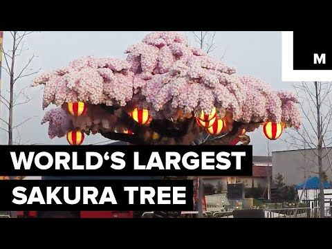 22 Legoland Japan Broke A World Record With Their Cherry Blossom Tree Made Out Of Legos Youtube Cherry Blossom Tree Blossom Trees Sakura Tree