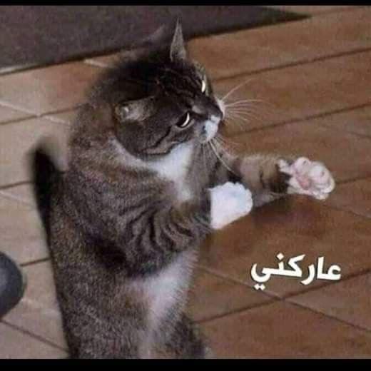 Pin By Aya Ahmad On Mems Funny Art Memes Funny Cartoon Quotes Funny Photo Memes