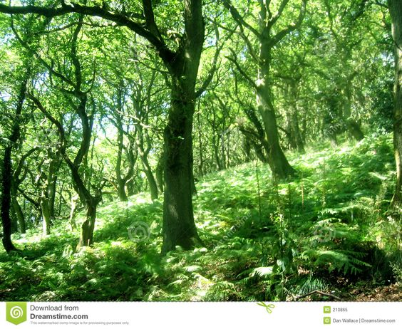 wooded hillside - Google Search