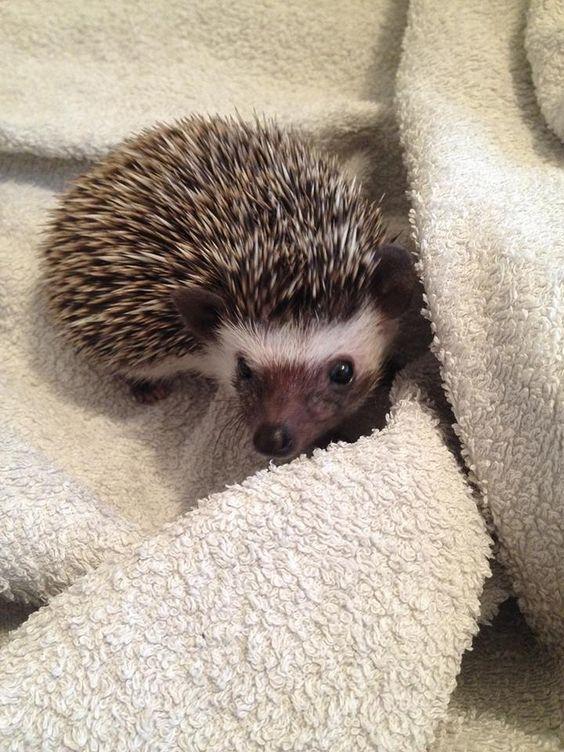 Post-bath cuddles http://ift.tt/1ZxDKLm