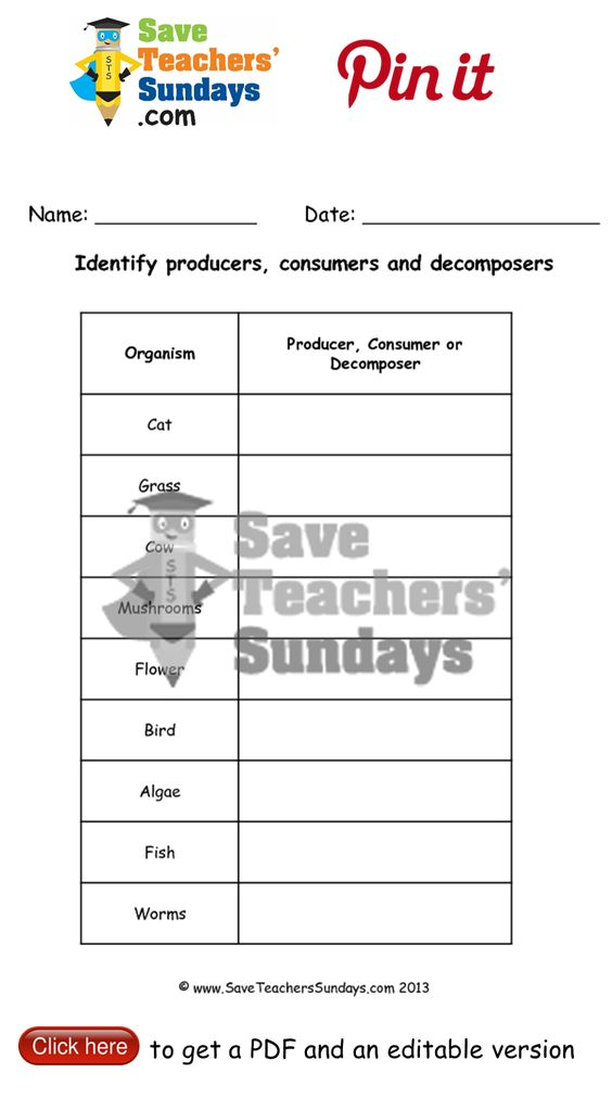 Food Chain Worksheet Answer Key - Templates and Worksheets