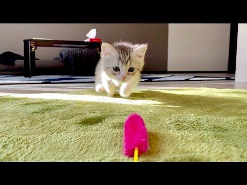 猫 動画 もち まる