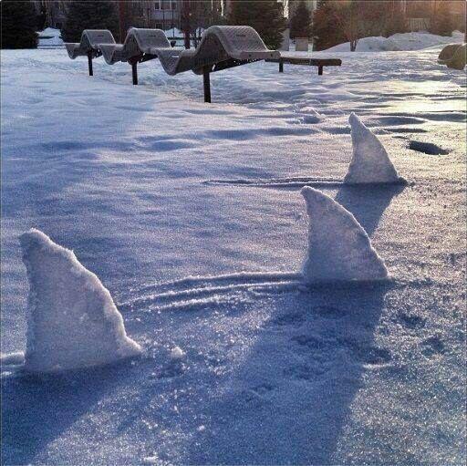 sharks fin snow sculpture #snowSculpture #snow #winter #sculpture #funny