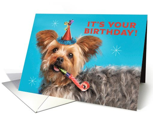 Happy Birthday For Anyone Cute Yorkshire Terrier In Party Hat Card Yorkshire Terrier Animal Birthday Happy Birthday
