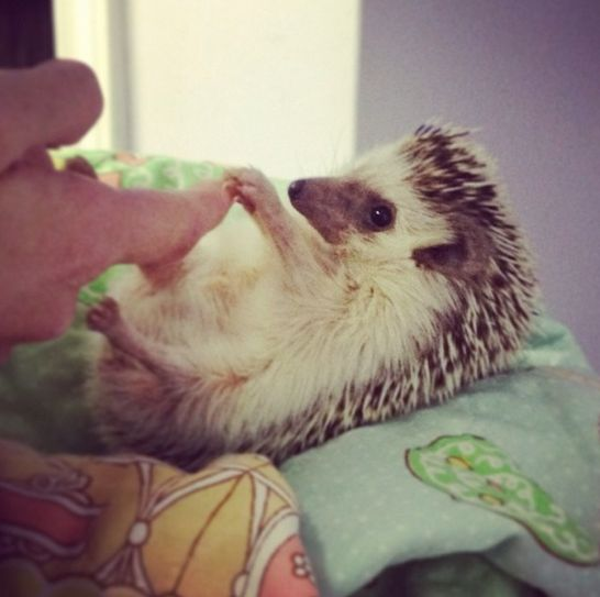Me and my hedgehog holding hands! :) - Imgur