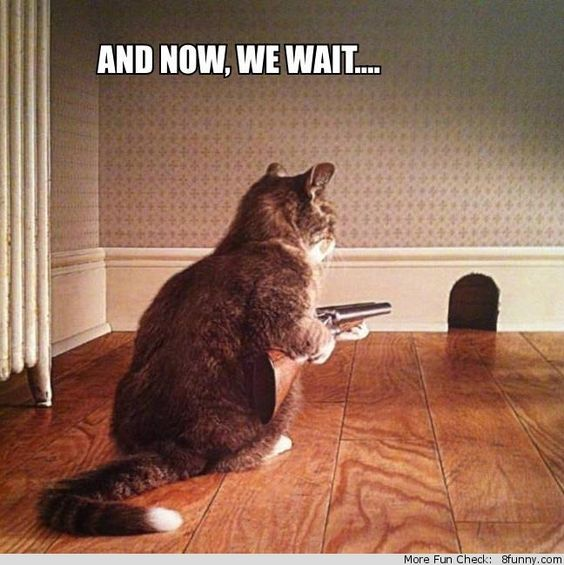 Cat Waiting Funny Cat Pictures Cat Quotes Funny Cats