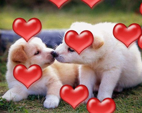3d gif animations free download i love you images photo - Free funny animal screensavers ...