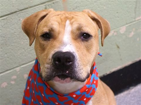 At Risk To Be Destroyed 10 15 19 Don Julio Is At Risk Of Euthanasia And Needs Placement Please Consider Opening Y Animals My Animal Pet Care