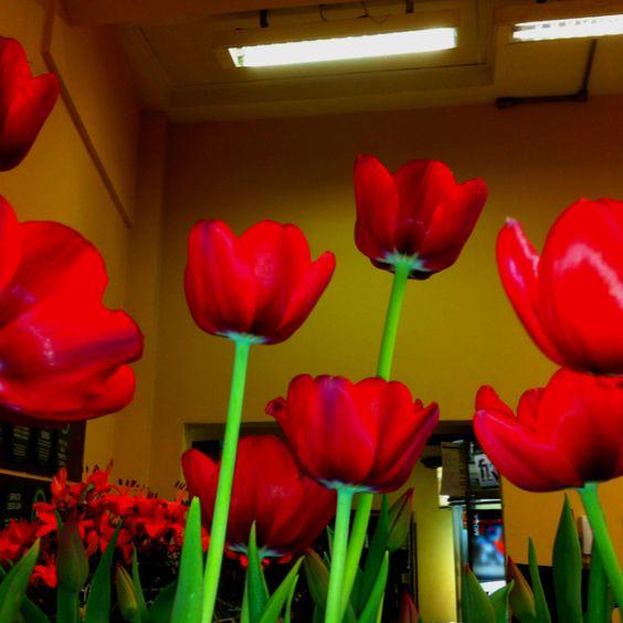 Paixão por tulipas!