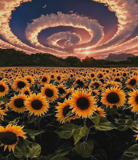 "Polubienia: 9,477, komentarze: 48 – Awesome Dream Places (@awesomedreamplaces) na Instagramie: ""Sunflowers Photo by @anjarxs  #awesomedreamplaces"""