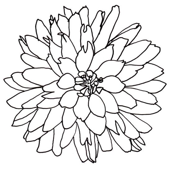 Line Drawing Of A Flower Free Download Clip Art Free Clip Art Flower Line Drawings Flower Drawing Drawings