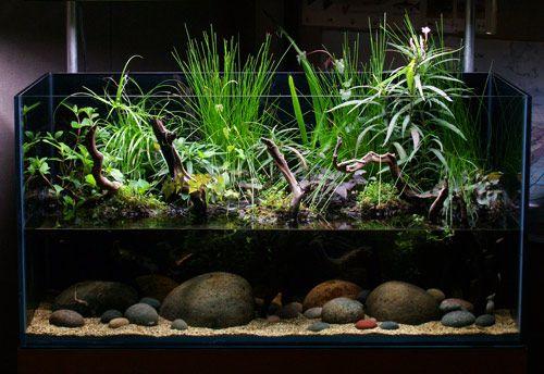 ... aquarium live plants reptiles tanks terrarium a small fish plants nice