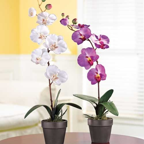 Cheer up any room with this Faux Orchid. It looks lifelike, but there's not need to water, prune or fertilize.