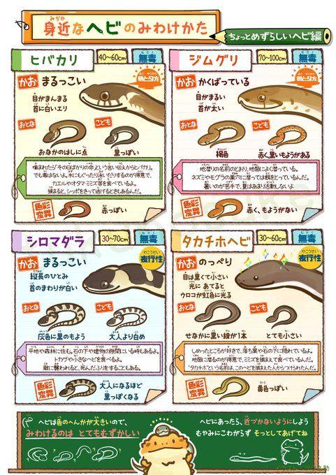 身近なヘビの見分け方 イラスト解説が可愛いうえにめっちゃ分かり