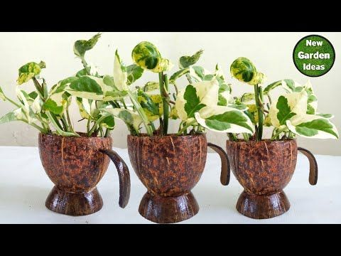 How To Make Money Selling House Plants