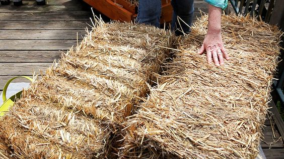 Straw Bales Straws And Straw Bale Gardening On Pinterest