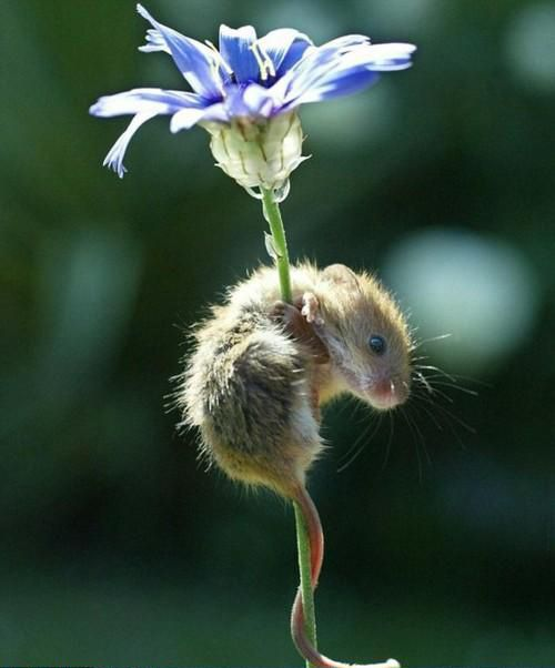 Tiny Garden Visitor