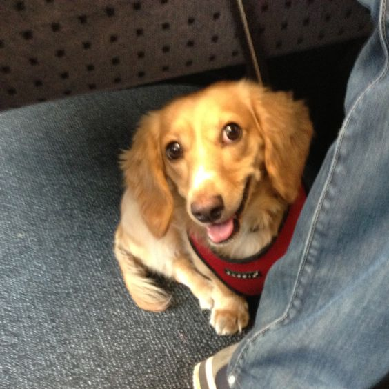 Traveling With Dogs On Swiss Trains Dog Travel Dogs Travel