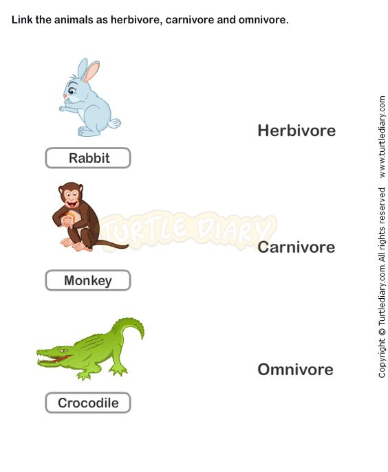 Food Chain Worksheet 2 - science Worksheets - grade-2 Worksheets ...