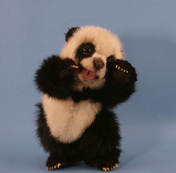 Cute Baby Panda Bears - Bing Images