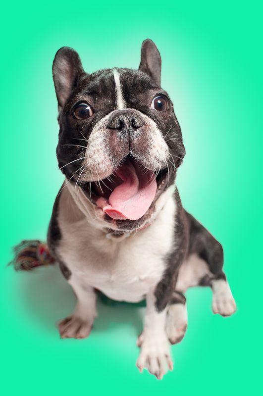 Apasionados por la fotografia de mascotas! elestudiodeblanca.com/galerias/fotografos-de-mascotas #perros #mascotas #fotosmascotas #estudio