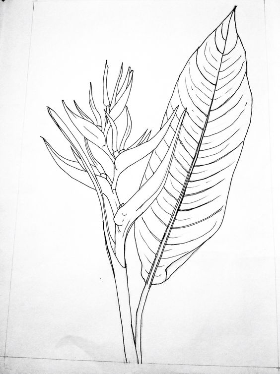 Line Art Ink : Line drawings ink and on pinterest