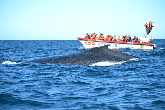 Zuid-Afrika - Plettenberg Bay - Whale