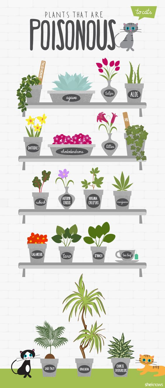 These common plants are particularly poisonous to cats. Make sure you keep them out of reach if you have them in your home.: